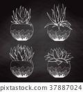 Sketch succulents in pots 37887024