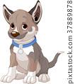 Puppy Dog 37889878