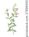 식물, 잎, 이파리 37896005