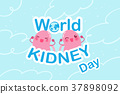 world kidney day concept 37898092