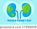 world kidney day concept 37898098