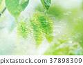 自然 樹葉 葉子 37898309