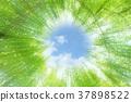 自然 樹葉 葉子 37898522
