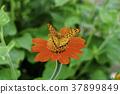 butterfly butterflies spring 37899849