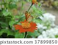 butterfly butterflies spring 37899850