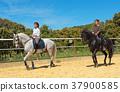 riding woman on stallion 37900585