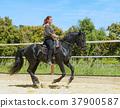 riding woman on stallion 37900587