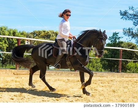 riding woman on stallion 37900589