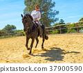 riding woman on stallion 37900590