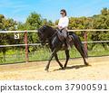 riding woman on stallion 37900591