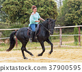 riding girl and stallion 37900595