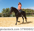 riding girl and stallion 37900602