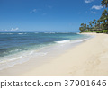 하와이, 해변, 비치 37901646