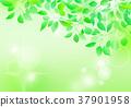 新綠色光束背景 37901958