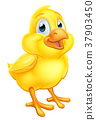 Easter Chick Baby Chicken 37903450