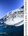 鯊魚 巴哈馬 跳水 37904965