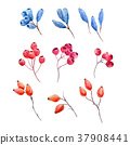 Watercolor forest berries 37908441