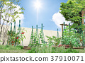 vegetable garden, vegetable gardens, kitchen garden 37910071