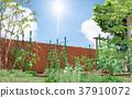 蔬菜园 菜园 原野 37910072