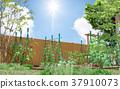 蔬菜園 菜園 原野 37910073