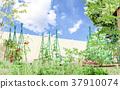 蔬菜園 菜園 原野 37910074