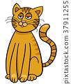 cat,cartoon,illustration 37911255
