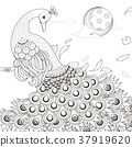 graceful peacock coloring page 37919620