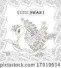 graceful swan 37919634
