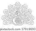 elegant peacock 37919693