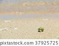 寄居蟹 水邊 沙灘 37925725