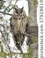 avian, bird, birds 37928619