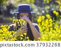 Woman tourist taking photo of yellow flowers  37932268
