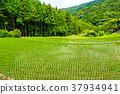 梯田 在板湿洗或铺纸件 水稻 37934941