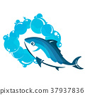 Fish in water 37937836