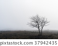 Lone tree in a foggy landscape 37942435