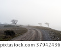 Misty spooky country road 37942436