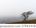 Bare tree by seaside in the mist 37942438