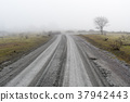 Misty country road 37942443