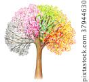 树木 树 夏天 37944630