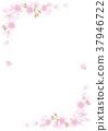 Cherry Blossoms 37946722