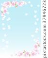 Cherry Blossoms 37946723