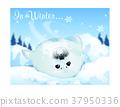 冬天 松樹 雲 37950336