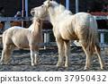 자식, 말, 부모와 자식 37950432