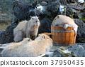 목욕, 동물원, 포유류 37950435