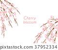 死棕色櫻桃樹 37952334
