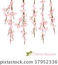死棕色櫻桃樹 37952336