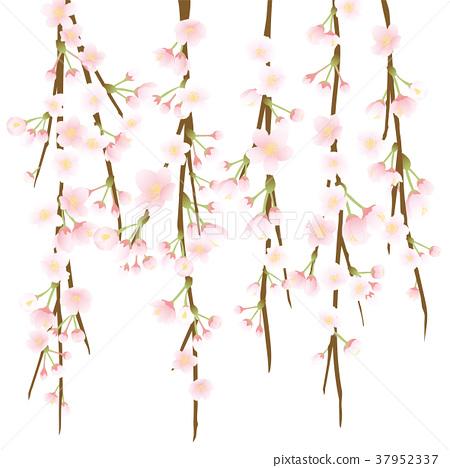 死棕色櫻桃樹 37952337