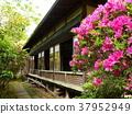初夏 花朵 花 37952949