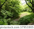 early summer, green leaves, tender green 37953905