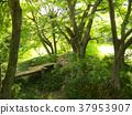 early summer, green leaves, fresh verdure 37953907